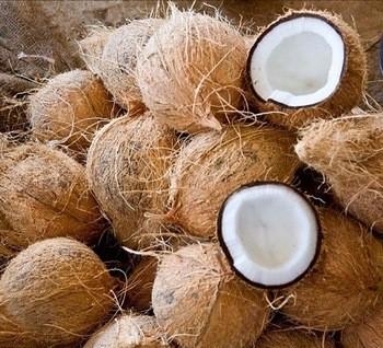 Semi Husked Coconut | surajagimpex